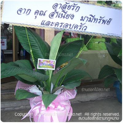 พวงหรีด สุพรรณบุรี,ร้านดอกไม้ สุพรรณบุรี