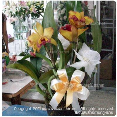 ร้านดอกไม้ ราชบุรี,พวงหรีด ราชบุรี